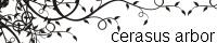 cerasus arbor